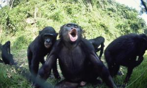 Een aapje verlaat de scène - pic worldwildlife.org