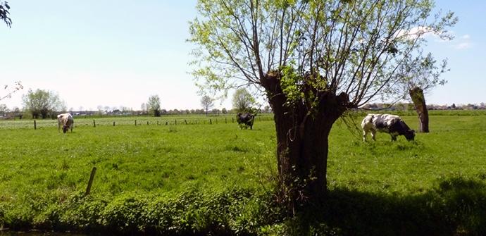 Slag-bij-Gavere route - pic tov.be