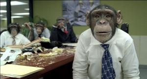 pic chimpanzeefacts.net