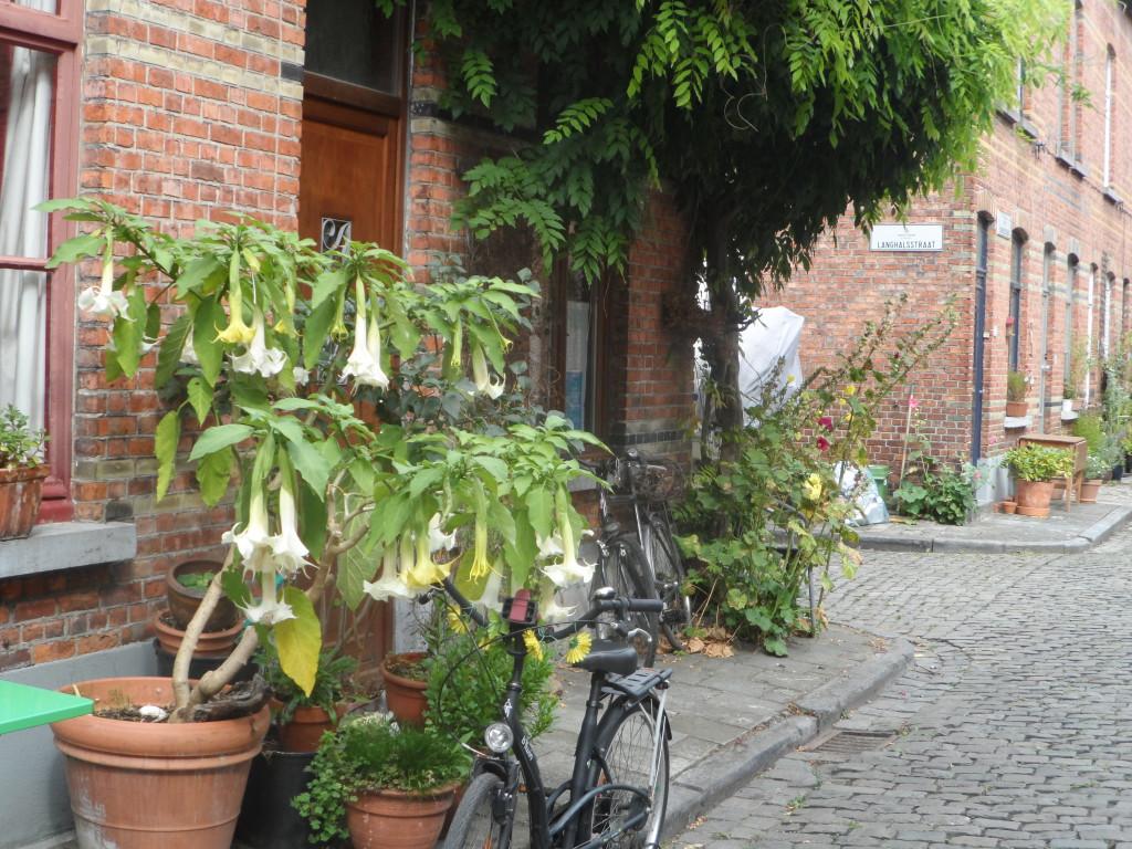 Takkebosstraat - hoek Langhalsstraat-