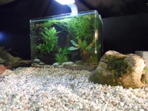 Kikvorsstraat - Aquariumexpositie