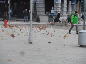 1c Woodrow Wilsonplein - Graaf van Vlaanderenplein - herfstbladeren