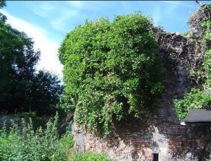 Ter Hoye - Verborgen torentje - zicht vanaf Achtervisserij - pic Adrian Brysse