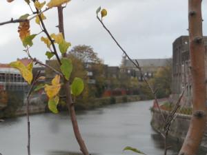 Nederschelde - zicht vanaf Keizerpoort - Ter Hoye ligt voorbij de bocht