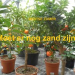 10 Antwerpesteenwg - Sint-Amandsberg - Tuincentrum Van Eeckhaut(1) - kopie