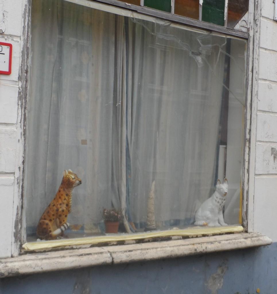 Doornzelestraat - hoek Nieuwland - kat en hond
