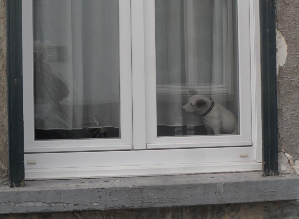 Houtbriel - plastic hondje bij raam