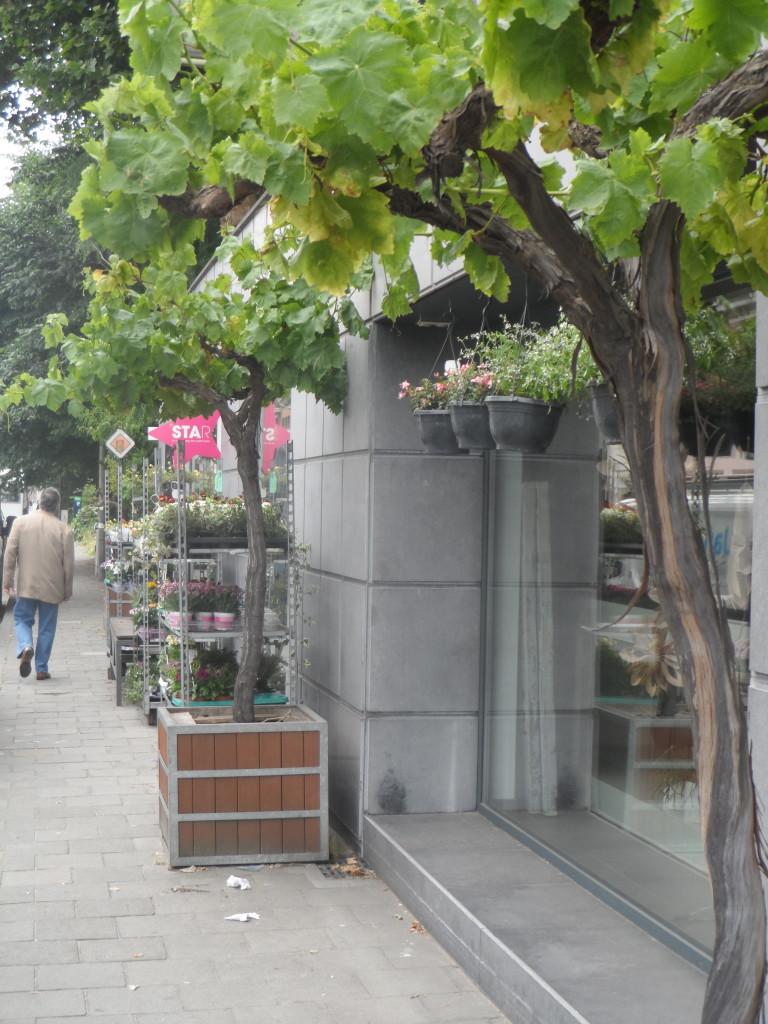 Antwerpsesteenweg – Reisseizoen! Boulevard Saint Germain? Neen, bloemen- en plantenwinkel XX zorgt voor de groene uitstraling.