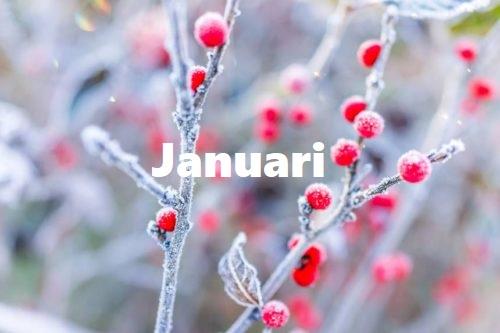 "GENTSE WINTER/ STAD – ""Januari"" mee…"
