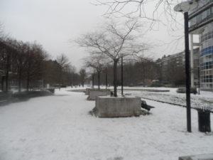 De eerste sneeuw, dinsdag 22 januari (2019)