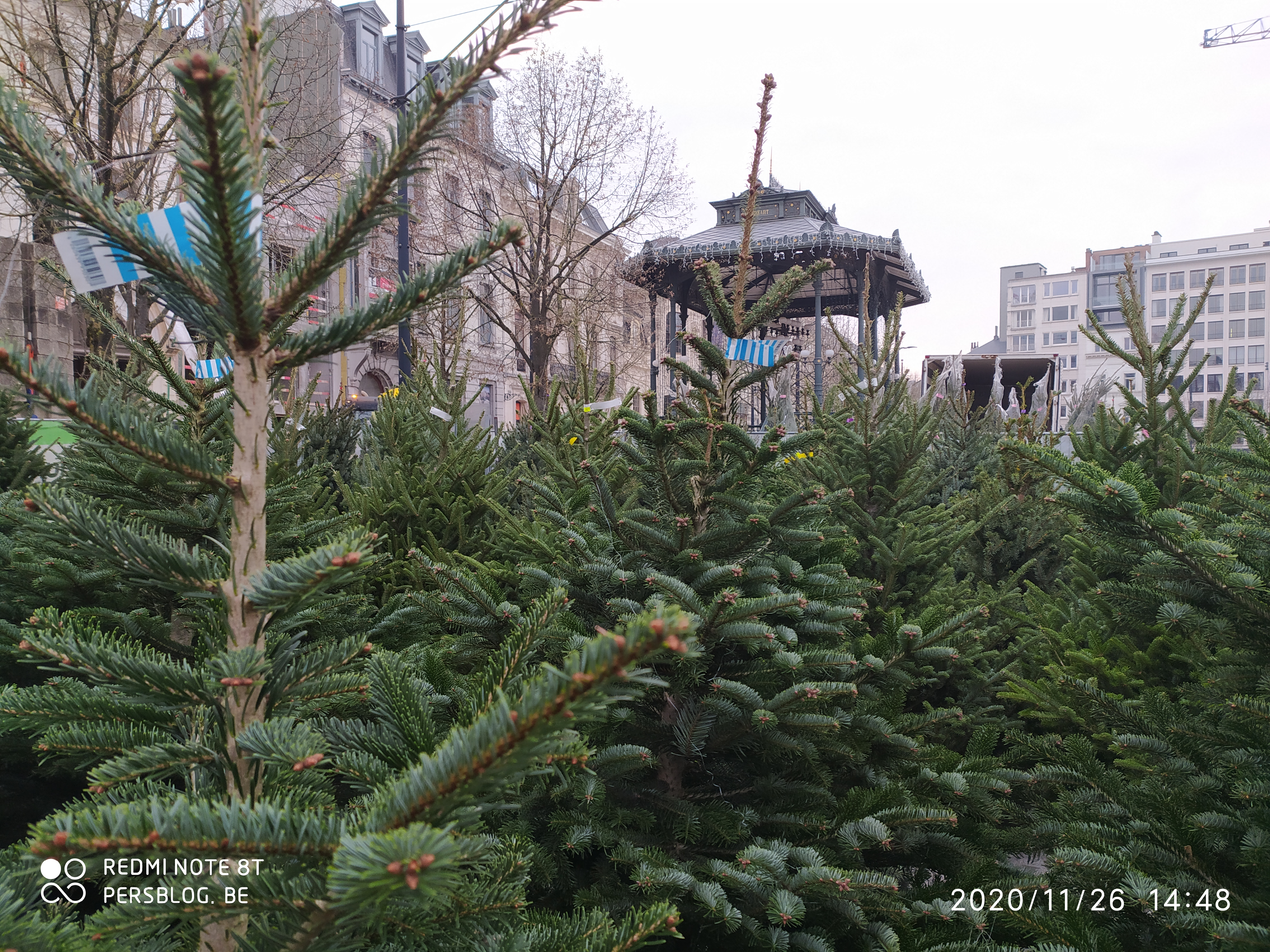 Kerstbomen op de Kouter